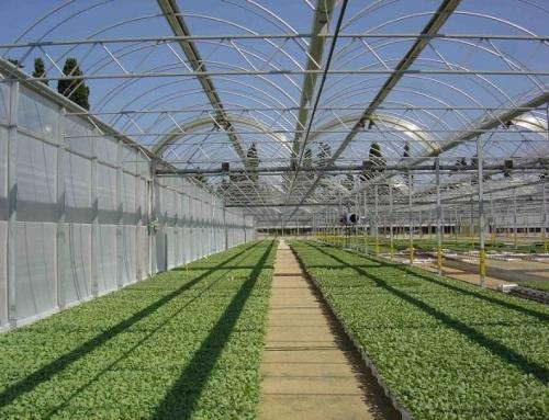پرداخت تسهیلات به متقاضیان احداث گلخانه در سمیرم