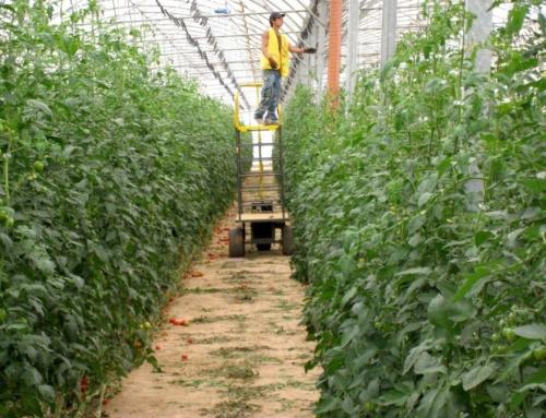 ایجاد گلخانه در کشورهای حاشیه خلیج فارس با خاک ایران!