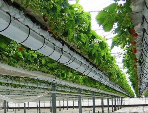 ۲۰ میلیارد تومان برای توسعه شهرکهای کشاورزی اردبیل تخصیص یافت