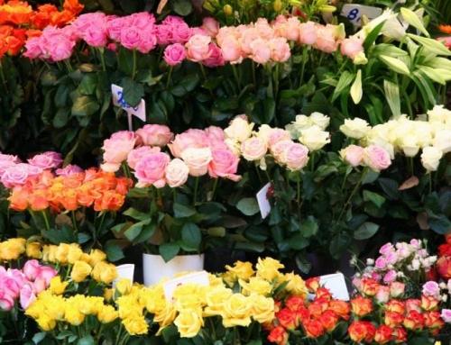شانزدهمین نمایشگاه گل محلات
