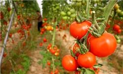 بخش خصوصی در توسعه گلخانهها مورد حمایت است