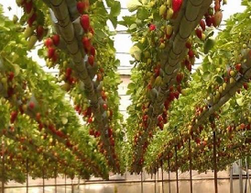 استفاده از آب باران، راهی مناسب برای آبیاری گلخانهای و کشت دیم است