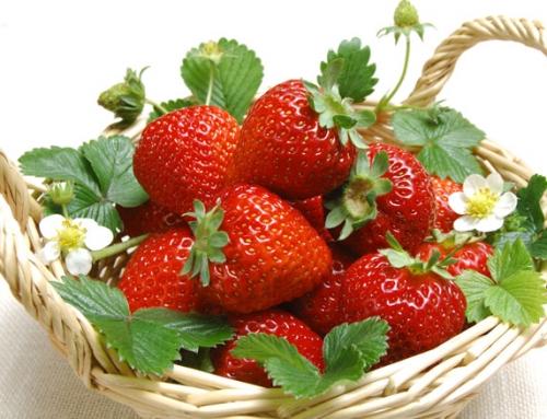 واکنش برخی ارقام توتفرنگی (.Fragaria×ananssa Duch) به کمآبیاری از نظر سطح برگ و برخی ویژگیهای کمّی و کیفی میوه