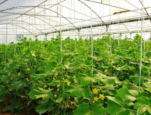 فراخوان عمومی سرمایهگذاری شهرک گلخانهای سپهر
