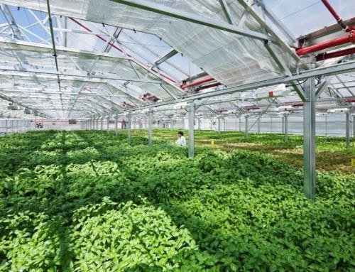 جشنواره ملی استارتاپهای فناوری گلخانهای در پیشوا برگزار میشود