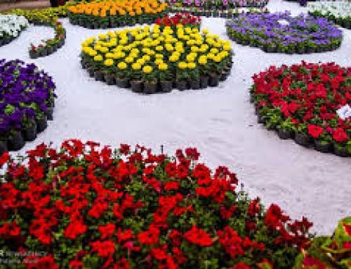 سیزدهمین دوره نمایشگاه بین المللی گل و گیاه، ابزار، ادوات باغبانی و تجهیزات گلخانه ای تبریز ۹۸