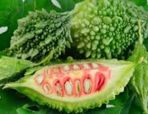 کارلا؛ گیاهی تلخ که کام بیماران را شیرین میکند
